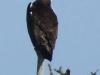 eaglebremen
